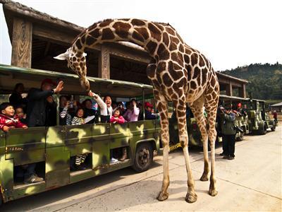 10月热卖*[杭州二日游] 宋城-西湖-杭州野生动物园> 苏州五市到杭州